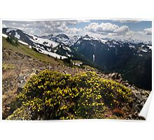 Mountain Bouquet - Olympic N. P. Poster
