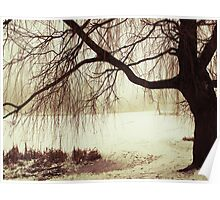 A Sad Tree - city Kaliningrad, Russia Poster