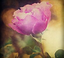Rose Dreams by Laura Palazzolo