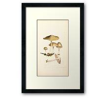 Coloured figures of English fungi or mushrooms James Sowerby 1809 0133 Framed Print