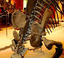 Stegosaurus by Sheryl Unwin