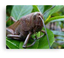 Up-Close Grasshopper Canvas Print