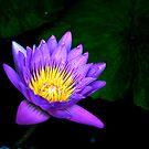 Purple Beauty by Alvaro Iribarren