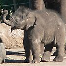 Baby Elephant Luck by louisegreen