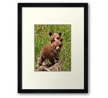 Black Bear Cubs Framed Print