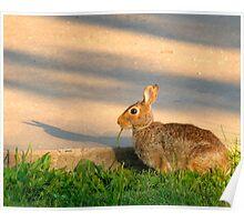 Dynamic Rabbit Poster