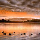The Evening Geese by Tara  Turner