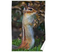 Standing Tall - Eastern Chipmunk Poster