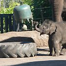 Playtime At The Zoo by louisegreen