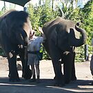 Elephant Show by louisegreen