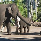 An Elephant's Tale by louisegreen