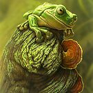 Green Frog 2o1o by Christopher Pope