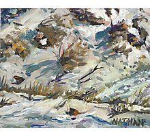 Desert Snow Photographic Print