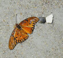 Beached Butterfly by Caren