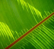 New Leaf  by Steven Huszar