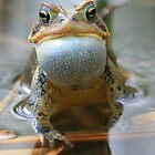 Spring Chorus - American Toad by naturalnomad