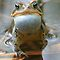 Toads - Order - Bufonidae - (Amphibians & Reptiles Category)
