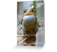 Spring Chorus - American Toad Greeting Card