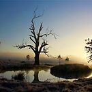 Frosty Morn by Kym Howard
