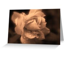 Monochrone Rose Greeting Card