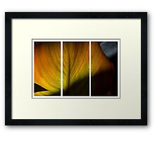 Natural Tryptych Framed Print