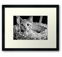 Chet Catkins Framed Print