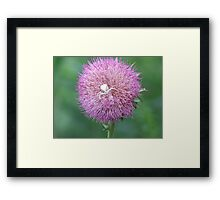 What A Great Place To Hide! Framed Print