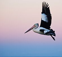 A Pelican Solo - Ascent by clydeessex