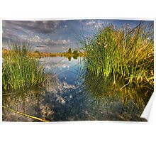 Among the Reeds Poster