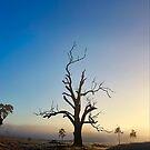 A Tree by Kym Howard