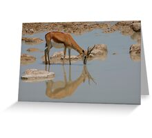 Springbok Reflection Greeting Card