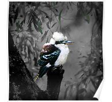 Kookaburra's Gum Tree Poster