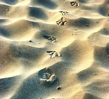 Steps in the sand by DavidsArt