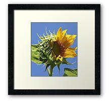 Sunflower Half n Half Framed Print