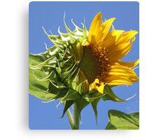 Sunflower Half n Half Canvas Print