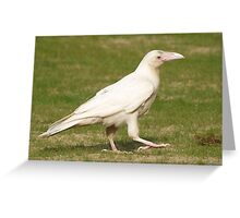"""Dare To Be Different"" (Rare White Raven) Greeting Card"