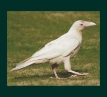 """""""Dare To Be Different"""" (Rare White Raven) T-Shirt"""