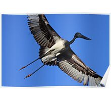 Jabiru Flight Poster