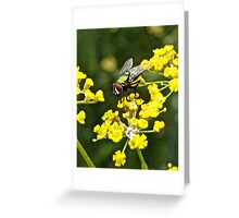 Fly and Fennel  Greeting Card