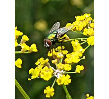 Fly and Fennel  Photographic Print