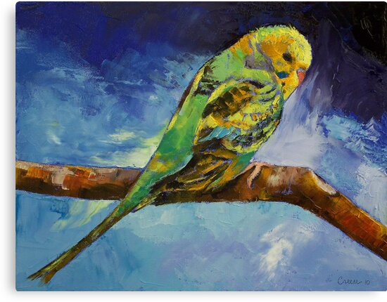 Wild Parakeet by Michael Creese
