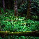 the woods by Bill vander Sluys