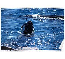 Majestic humpback whales 2 -Australia Poster