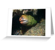 Green Moray Greeting Card
