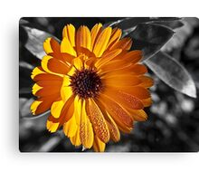 feeling the warmth Canvas Print
