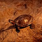Baby turtle by Shiva77