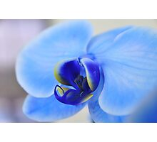 Blue Orchid, As Is Photographic Print