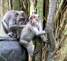 Monkey Forest by styles