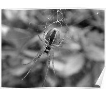~ Spider ~ Poster