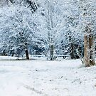 Snowscape by Janine  Hewlett